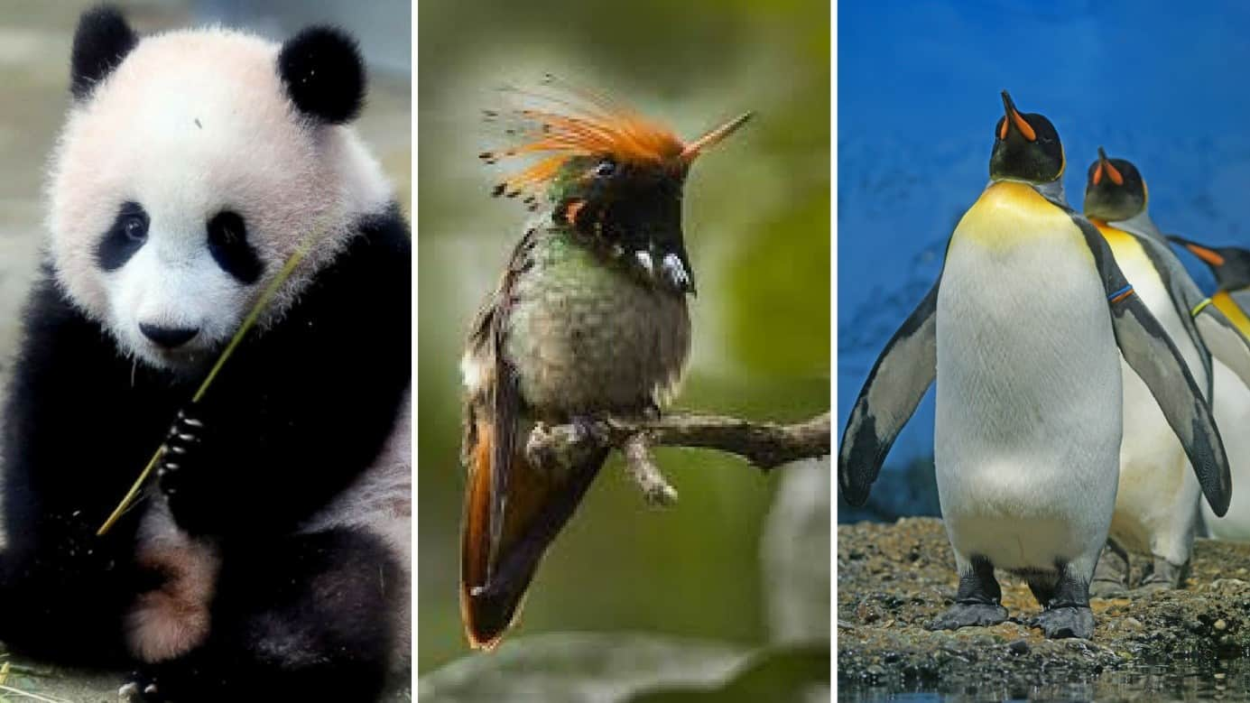 Illustration of Google Panda, Hummingbird and Penguin updates